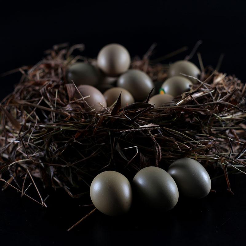林间野鸡蛋杉树湾泸州纳溪特产官方正品新鲜农村散养土鸡蛋枚
