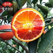 老伙记【资中血橙5斤泡沫装】四川资中塔罗科血橙 16-20个精品果 非红橙