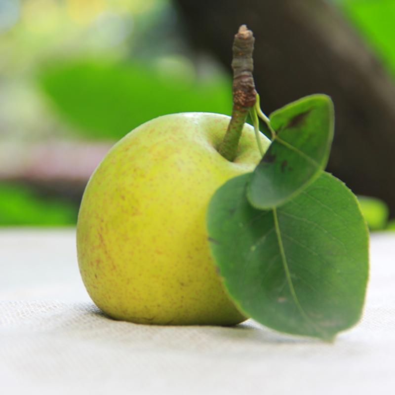 四川龙泉山 黄阿丑小丑梨 5斤 当季水果新鲜梨子 京东包邮(市场价59元)